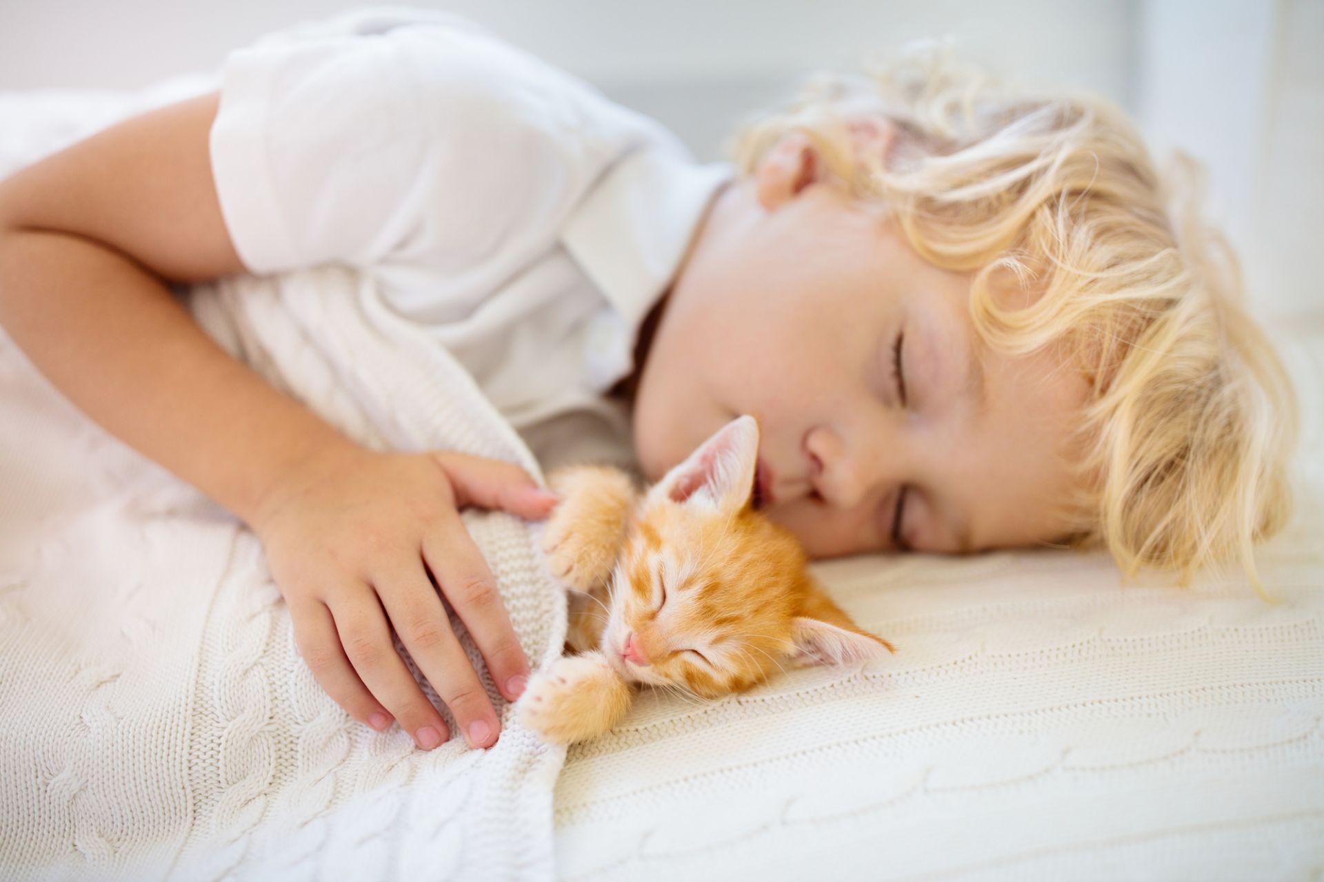 Pieni poika nukkuu sängyllä kissanpojan kanssa